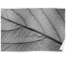 Leaf 9119 Poster