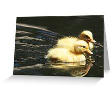 Cute baby ducklings - Adelaide Hills Greeting Card