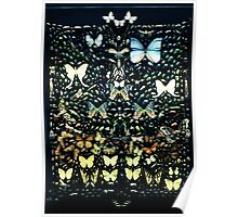 Butterflies at the Natural History Museum Poster