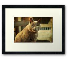 Cool Cat George Framed Print