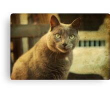 Cool Cat George Canvas Print