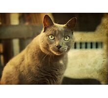 Cool Cat George Photographic Print