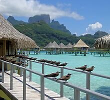 Overwater Bungalows on Bora Bora by Kieta Mall Skoglund