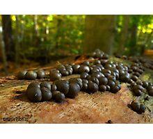Mushroom Colony Photographic Print