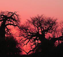 Boabab sunset by jozi1