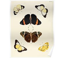 Exotic butterflies of the three parts of the world Pieter Cramer and Caspar Stoll 1782 V2 0038 Poster