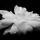 Rainkissed by Path-Finder