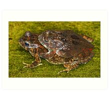 Mating frogs! Art Print