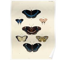 Exotic butterflies of the three parts of the world Pieter Cramer and Caspar Stoll 1782 V3 0111 Poster