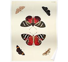 Exotic butterflies of the three parts of the world Pieter Cramer and Caspar Stoll 1782 V1 0123 Poster