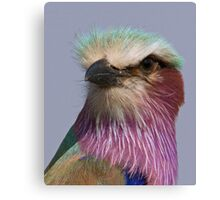 Lilac Breasted Roller Close Up  Canvas Print