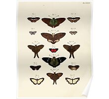 Exotic butterflies of the three parts of the world Pieter Cramer and Caspar Stoll 1782 Supplement 0260 Poster