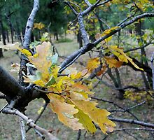 Leaves on a Branch by OakRanger
