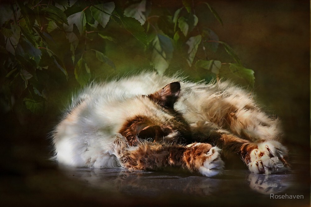 """""""Paws Warmed by the Sun ...""""(textured) by Rosehaven"""