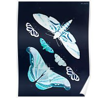 Exotic butterflies of the three parts of the world Pieter Cramer and Caspar Stoll 1782 V2 0110 Inverted Poster