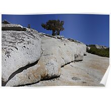 Tree on Granite Dome Poster