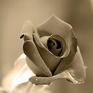 Sepia Rose by Igor Shrayer