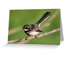 ''Grey Fantail'' Greeting Card