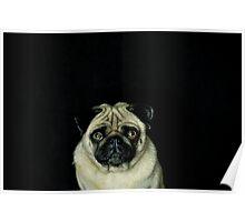 Intense Pug Poster