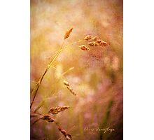 No Yesterday Photographic Print