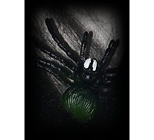 Yikes A Spider! Photographic Print