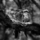 Tawny frogmouth family by trishie