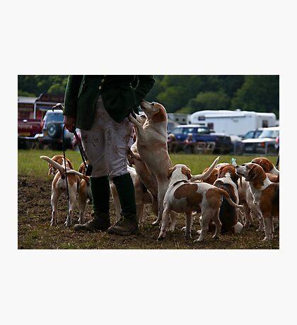 Mud hounds Photographic Print