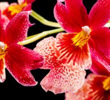 Orchid - 29 Sticker