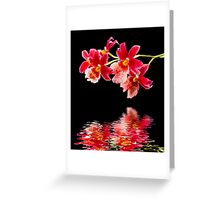 Orchid - 30 Greeting Card