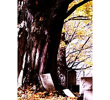 Restful Tree Photographic Print