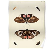 Exotic butterflies of the three parts of the world Pieter Cramer and Caspar Stoll 1782 V2 0010 Poster