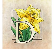D is for Daffodil Photographic Print