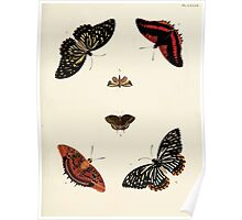 Exotic butterflies of the three parts of the world Pieter Cramer and Caspar Stoll 1782 V1 0353 Poster
