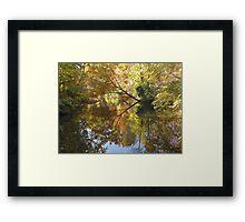 Splendor in the Park Framed Print