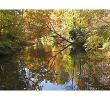 Splendor in the Park Photographic Print
