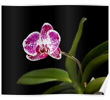 Orchid - 42 Poster