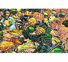 Colorful Gourds Photographic Print