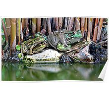 Frog Pile - My Backyard Pond Poster