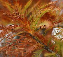Branches........of the Fir tree! by Ruth Lambert