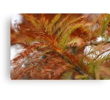Branches........of the Fir tree! Canvas Print
