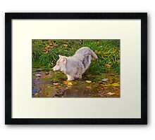 Water Wolf Framed Print