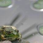 3 Lilypads and a Frog - My Backyard Pond, Dunrobin Ontario by Debbie Pinard