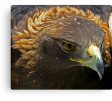 The Face of a Red Tailed Hawk - Ontario Canvas Print