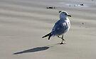 Seagull on the Beach - Port Aransas Texas by Debbie Pinard