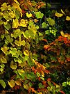 Bright Leaves over Balcony by RC deWinter