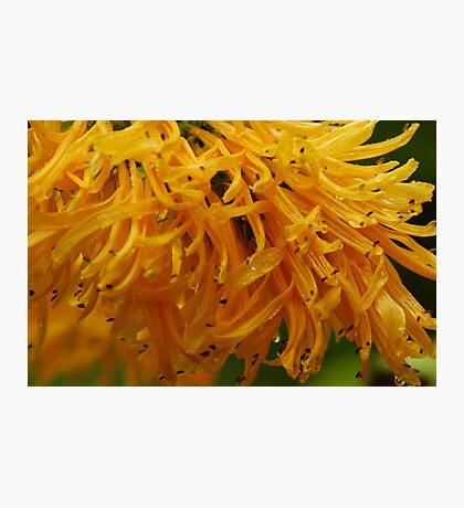 Golden Nature Photographic Print