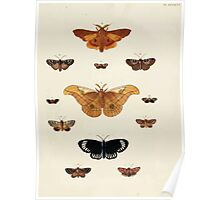 Exotic butterflies of the three parts of the world Pieter Cramer and Caspar Stoll 1782 V4 0443 Poster
