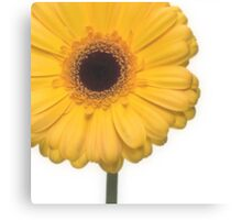 Square Yellow Gerbera Flower Canvas Print