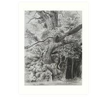 Rothley Park oak Ambleside. Art Print