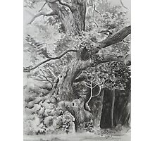 Rothley Park oak Ambleside. Photographic Print